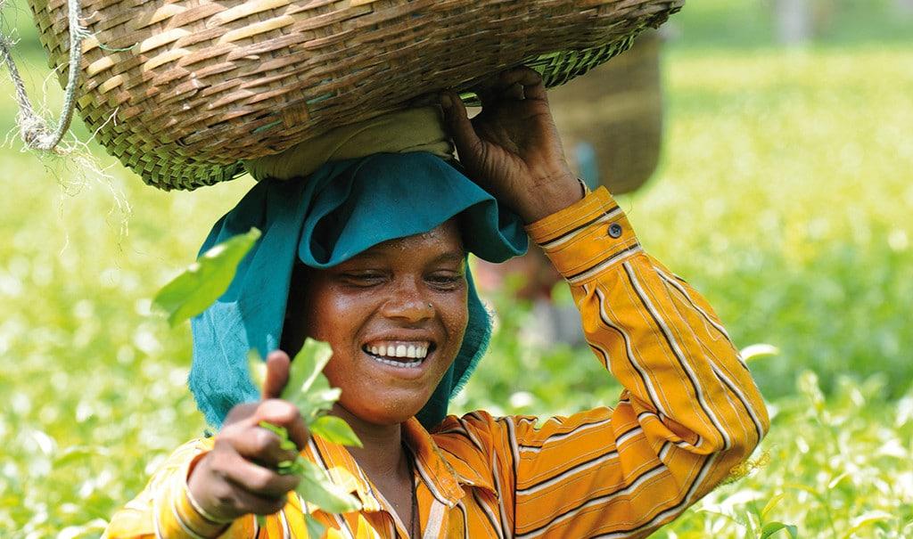 Lachende-Frau-imTeegarten-Assam-20110930