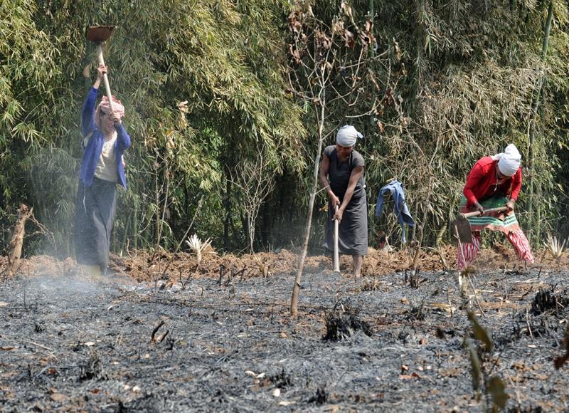 Die Eingeborenen roden jedes Jahr ein Stückchen Urwald und beackern es für den Eigenbedarf.