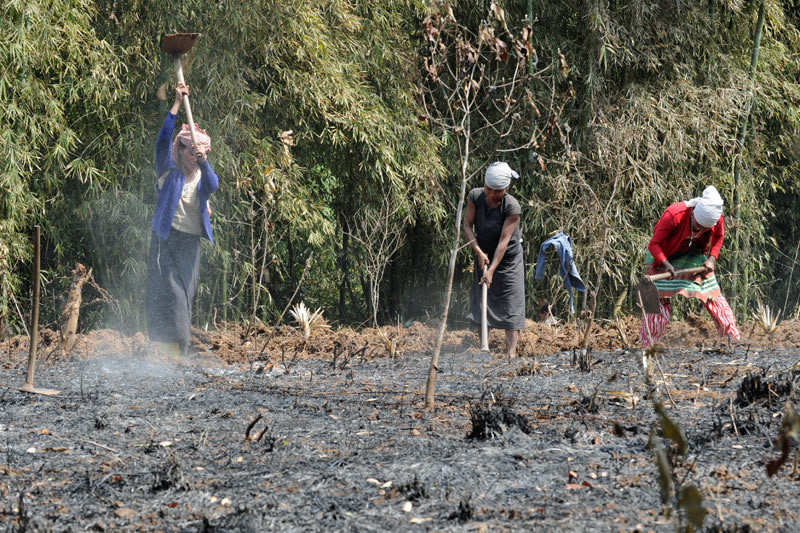 Doch das Überleben ist mühevoll. Zumeist pflanzen die Menschen auf einem gerodeten Stück Urwald fern vom Dorf alles für den Eigenbedarf an und beackern das Feld manuell.