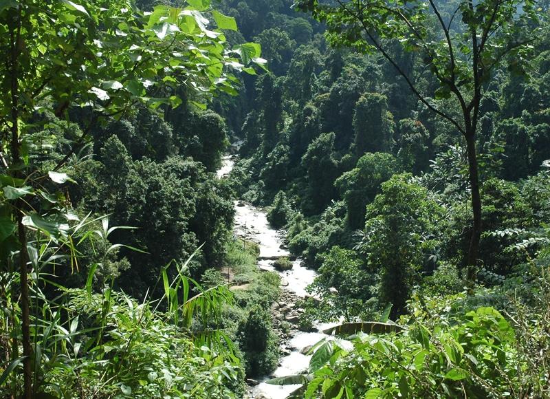 In den entlegenen Bergregionen gibt es noch einzigartige, subtropische Bergregenwälder.
