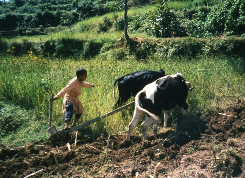Doch trotz aller Attraktionen und dem Tourismus ist Nepal immer noch eines der ärmsten Länder der Erde.