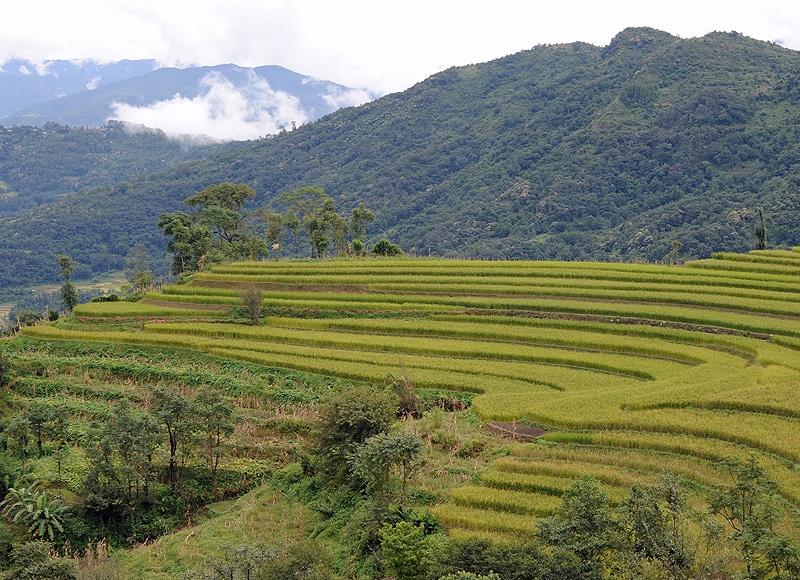 Auch die Reisterrassen brauchen den jährlichen Monsun und die Schmelzwasser der Berge.