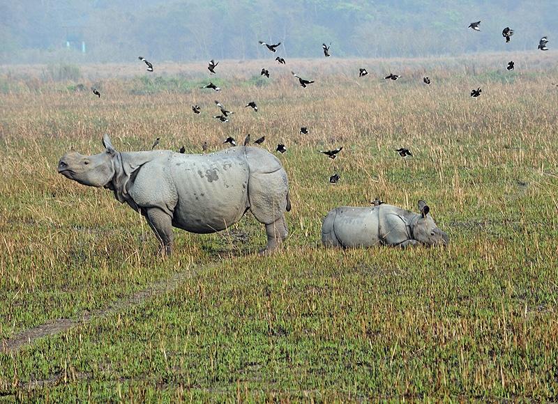 Seltene Pflanzen und fast ausgestorbene Tierarten, wie das weiße Nashorn, findet man dort.